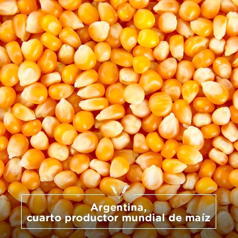 Argentina, cuarto productor mundial de maíz.